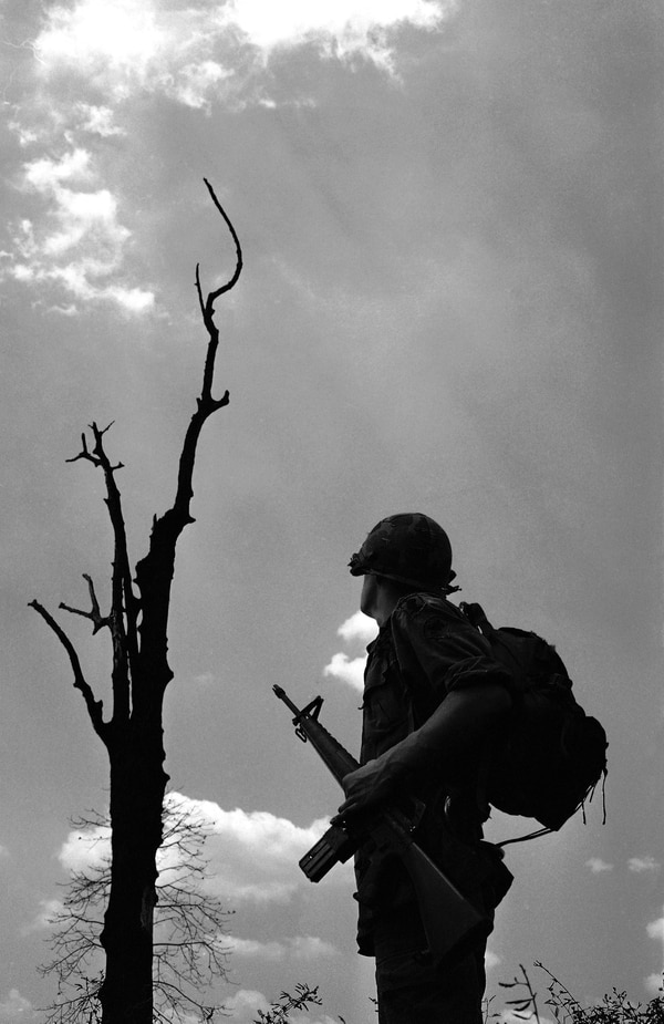 Dead jungle tree catches the eye of paratrooper of the U.S. 173rd air borne brigade in Vietnam's war zone C during operation Junction City on Feb. 26, 1967. (AP Photo)
