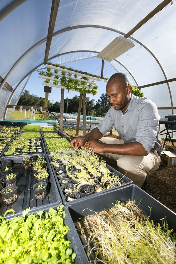 In this Dec. 11, 2015, photo, Brooklyn Mickell checks news plants at Soul Crop in East Lake Weir, Fla. Mickell a disabled Marine recently opened Soul Crop, an aquaponics farming operation through which he grows and sells herbs and greens. (Alan Youngblood/Star-Banner via AP) MAGS OUT; MANDATORY CREDIT