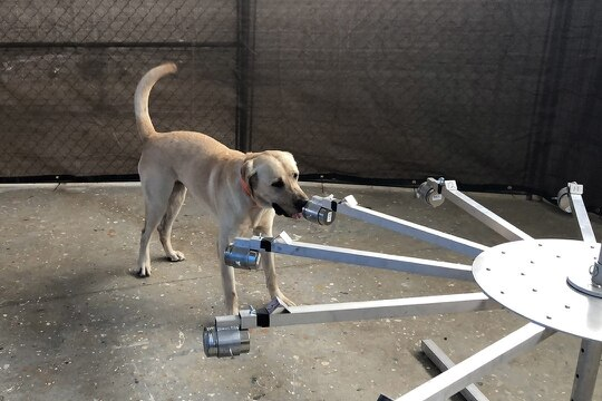Working dog Poncho works on the canine training wheel. Each arm of the wheel holds a device that contains substances the dog trains to distinguish. (Jack Bunja/CCDC Chemical Biological Center)