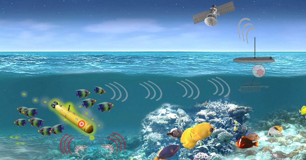 Can sea creatures see enemy submarines from the sea floor?