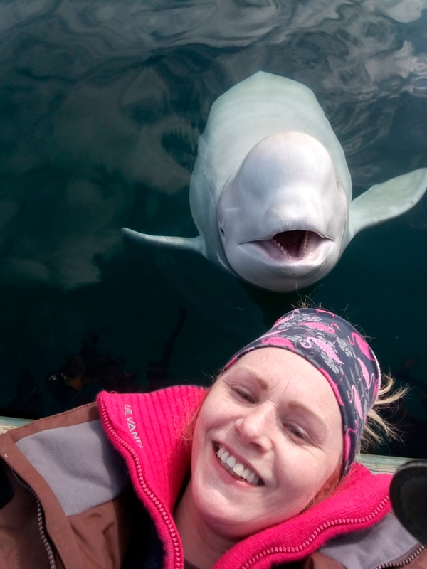 On Monday,Linn Saether poses with a beluga whale, days after a fisherman removed a harness with a mount for camera from the mammal, in Tufjord, Norway. (Linn Saether via AP)