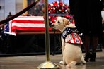 Hospital Corpsman 2nd Class Sully quickly advanced to fill critical service dog billet