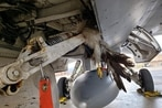 This is the hefty toll bird strikes have inflicted on the Air Force since 1995