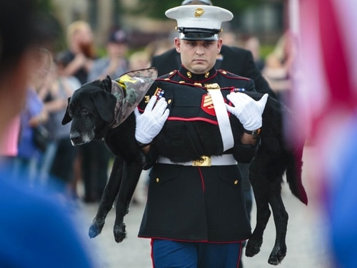 U.S. Marine veteran Jeff DeYoung carries Cena, a 10-year-old black lab who was a military service dog, aboard the LST 393 where he was put down on July 26. (Joel Bissell /Muskegon Chronicle via AP)