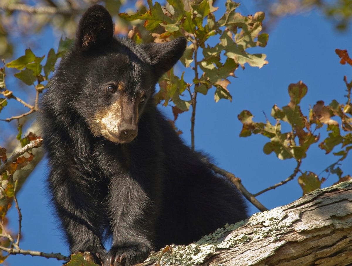 bear slates dating agency gender onlinedating