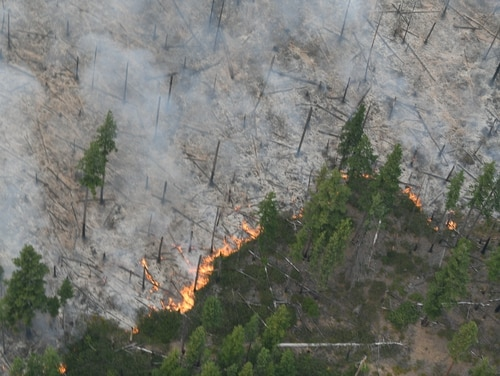 Trees burn as forest fires continue in eastern Oregon. Aug. 22, 2020. (Tech. Sgt. Aaron Perkins/Oregon Military Department)