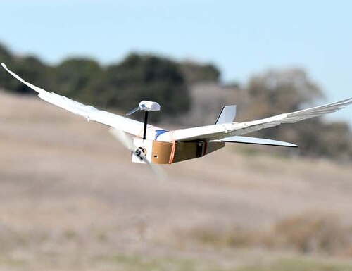 This partially feathered flying machine is a way for scientists to explore the specifics of feathers in flight. (Lentink Lab/Stanford University)