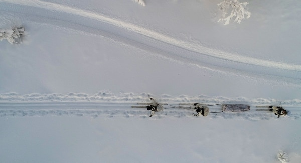 Participants of the Swedish Basic Winter Warfare Course perform a long-distance march on skis in Arvidsjaur, Sweden, Jan. 22. (Staff Sgt. Marcin Platek/Marine Corps)