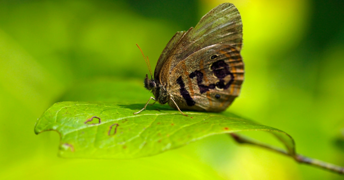 Butterfly on a bomb range: Endangered Species Act at work