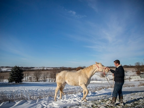 In this Nov. 27, 2018, photo, Cody Miller, 33, spends time with his horse Moon on his farm outside of Murray in southern Iowa. Miller, a veteran, says he can find peace while working with horses. (Kelsey Kremer/The Des Moines Register via AP)