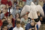 Air Force falcon mascot injured during West Point prank expected to make full recovery