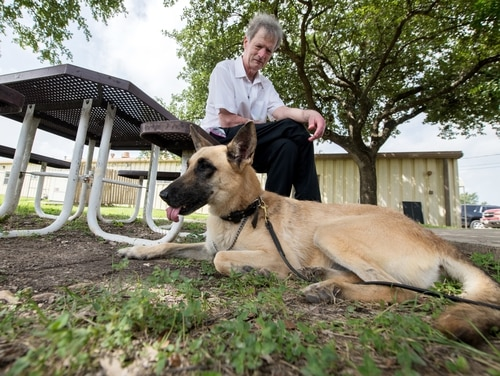 Military working dogs are available for adoption at Joint Base San Antonio-Lackland, Texas. (U.S. Air Force photo by Sarayuth Pinthong)