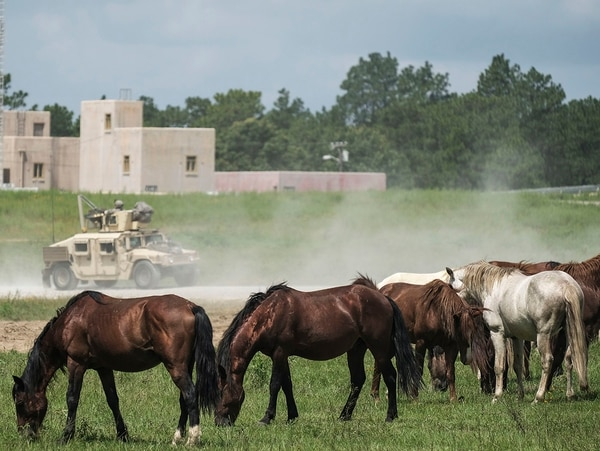Horses graze indifferently as a convoy passes during training operations at Fort Polk, La. Despite the wild life, Fort Polk soldiers reported feeling stressed, lonely or bored in a RAND Corp. study. (Staff Sgt. Daniel Love/Army)