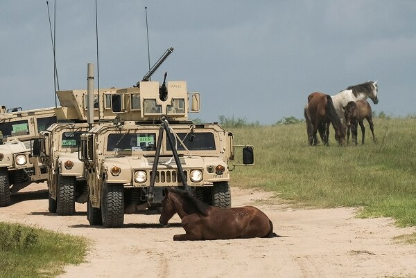 A horse blocks a 4th Infantry Brigade Combat Team (Airborne), 25th Infantry Division convoy during training operations in Fort Polk, La., June 17, 2017. (Staff Sgt. Daniel Love/Army)