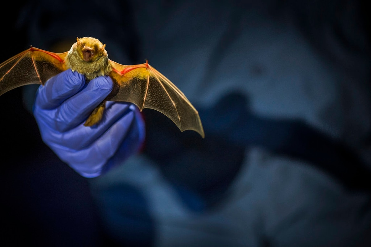 nocturnal animals estonian subtitles