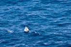 French fishing boat, Royal Australian Navy, rush to rescue injured sailor