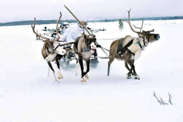 Russian servicemen of the Northern Fleet Arctic motorized rifle brigade practice operating on deer sleds. (Russian Defence Ministry)