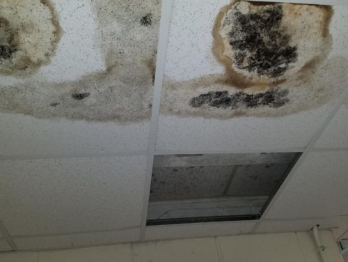Mold and mildew are shown on the ceiling of buildings at U.S. Army Garrison Fort Lee in Virginia. (Terrance Bell/Army)
