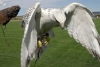 Air Force mascot injured in West Point prank