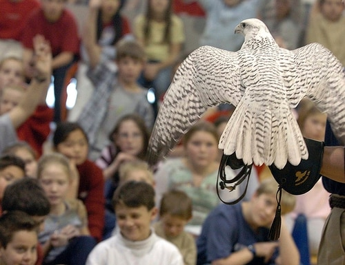In this photo taken in 2004, Aurora, a rare white gyrfalcon and Air Force Academy mascot, visits Pinon Valley Elementary School in Colorado Springs, Colo., on the arm of an academy cadet in the falconry program. The 22-year-old bird is expected to make a full recovery from injuries suffered during a prank at West Point. (Jerilee Bennett/The Gazette via AP)