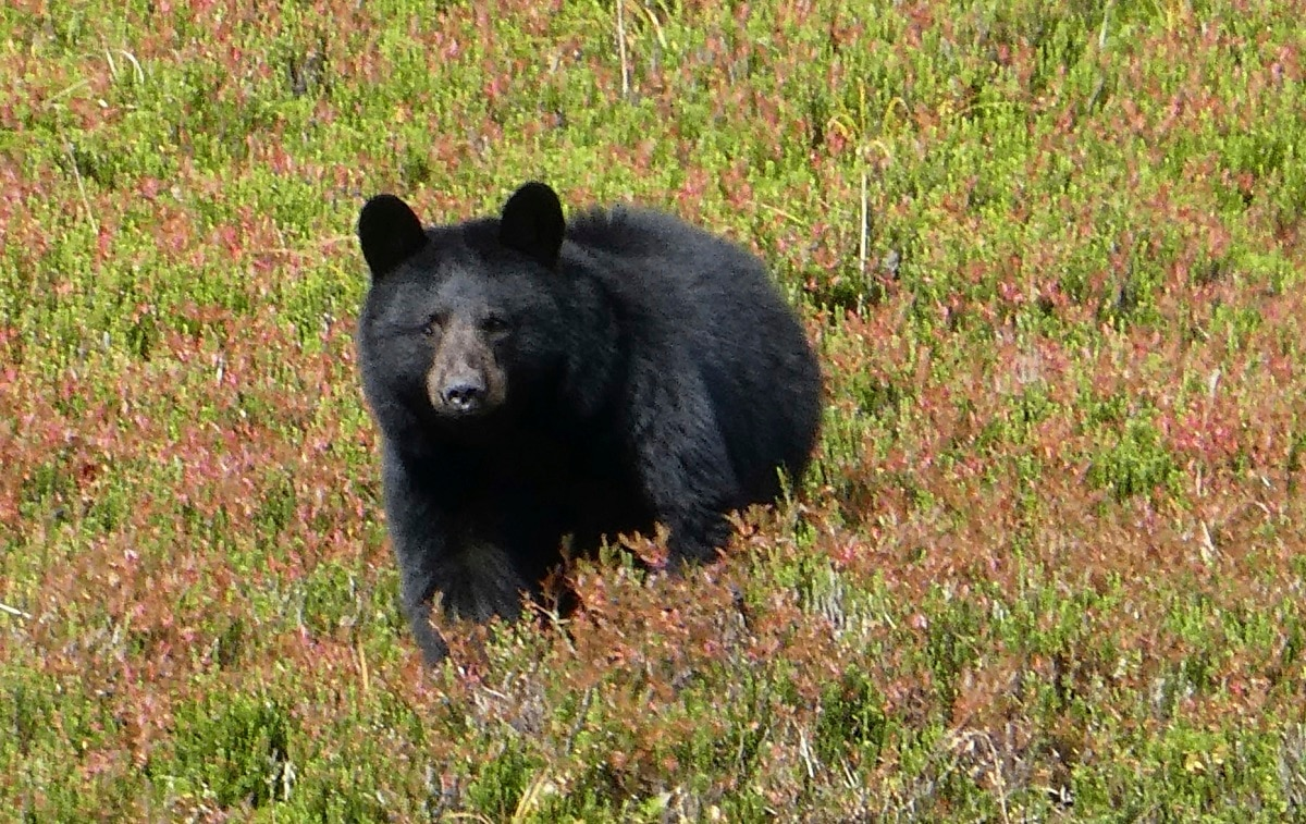 JBER man suffers life-threatening injuries after bear hunting accident
