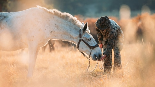 Cpl. William L. Stewart feeds a mule during an animal packers course as a part of Mountain Training Exercise 1-21 at the Marine Corps Mountain Warfare Training Center in Bridgeport, Calif., Oct. 8, 2020. (Cpl. Rachel K. Young-Porter/Marine Corps)