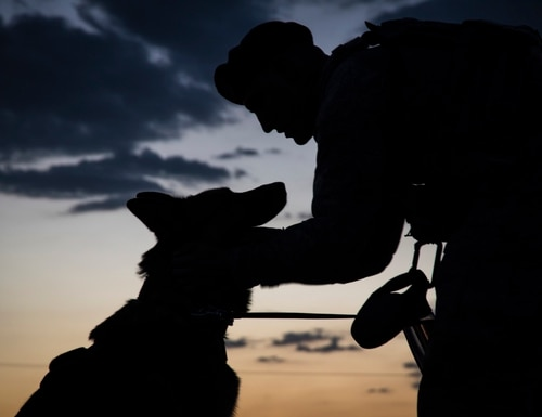 Senior Airman Ryne Wilson, 99th Security Forces Squadron military working dog handler, praises Habo during a patrol at Nellis Air Force Base, Nev., Aug. 7, 2017. Praising their dog for exhibiting good behavior is an exceptional way to help build a bond between the handler and their dog. (Airman 1st Class Andrew D. Sarver/Air Force)