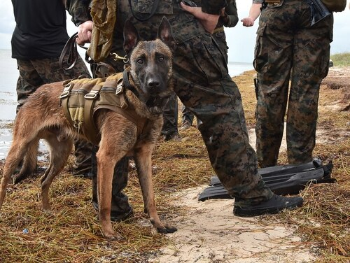 Marine Raiders from Marine Corps Forces Special Operations Command's K-9 Unit conduct water casts off the coast of Naval Air Station Key West on Nov. 27, 2018. (Danette Baso Silvers/Navy)