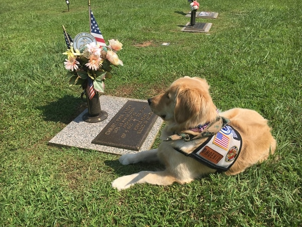 Phoenix, a service dog named after Levy, rests at the Marine's grave. (courtesy of Amanda Jacobs)