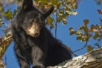 Boaters find dead bear cubs tied to weight in Alaska waters
