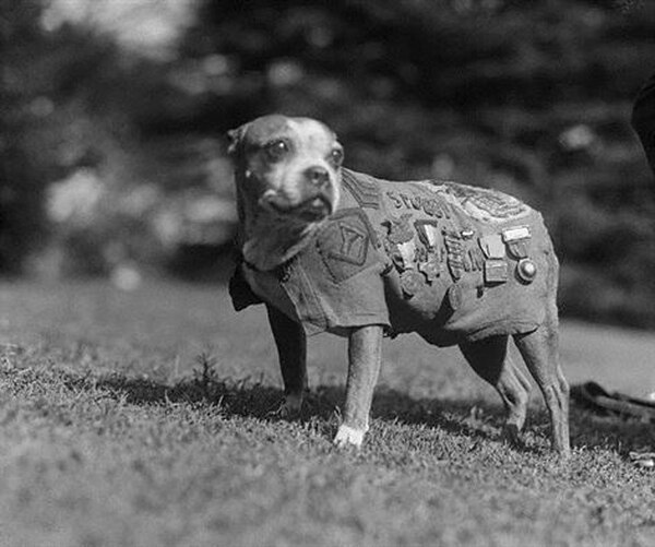 A stray dog wandered into an Army training center and into World War I lore as