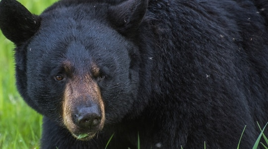 The death of a Georgia black bear from cocaine overdose was just one sliver of the stranger-than-fiction story coming to the big screen. (Sheila deVera/Air Force)