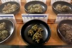 As the Army modernizes its standards to join, legal marijuana use is still an open question