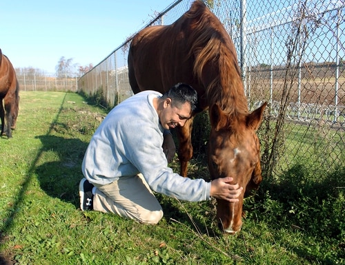 Inmate Daniel Elliot interacts with a horse named Hank on Wednesday, Nov. 6, 2019, as part of an equine-assisted psychotherapy program offered to military veterans inside the Willard-Cybulski Correctional Institution in Enfield, Conn. (Pat Eaton-Robb/AP)