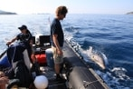 Navy practices with key anti-mine asset: dolphins