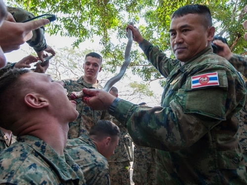 CAMP BANCHAN KREM, Thailand (Feb. 17, 2017) – Chief Petty Officer 1st Class Pairoj Prasansai, a jungle survival training instructor assigned to the Thai Reconnaissance Battalion, pours cobra blood into the mouth of a Marine with 2nd Battalion, 5th Marines during a jungle survival training as part of Cobra Gold 2017. Cobra Gold, in its 36th iteration, is the largest Theater Security Cooperation exercise in the Indo-Asia-Pacific. This year's focus is to advance regional security and ensure effective responses to regional crises by bringing together a robust multinational force to address shared goals and security commitments in the Indo-Asia-Pacific region. (U.S. Navy photo by Mass Communication Specialist 2nd Class Markus Castaneda/Released)