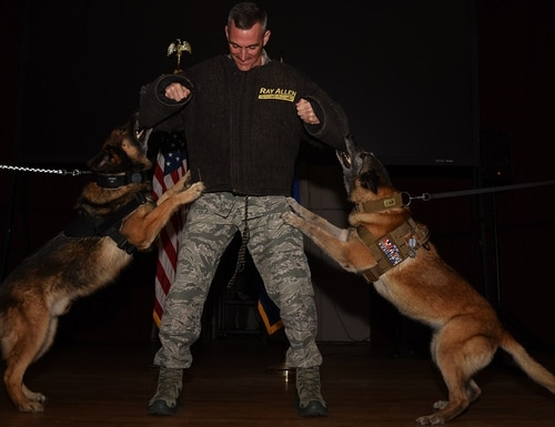 Marky, left, and Astra, 20th Security Forces Squadron military working dogs, perform their final bite during their retirement ceremony as Col. Daniel Lasica, 20th Fighter Wing commander, stands in a bite suit at Shaw Air Force Base, SC, on March 14. The dogs served a combined 21 years, or approximately 90 percent of their expected life spans. (Airman 1st Class Kathryn R.C. Reaves/Air Force)