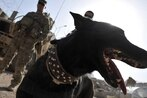 Report: Army adopted out aggressive bomb-sniffing dogs to families with young children