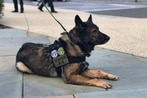 New K-9 legislation would provide federal funding for retired military working dogs' medical expenses