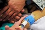 Animal testing debate pits injured veterans against dogs