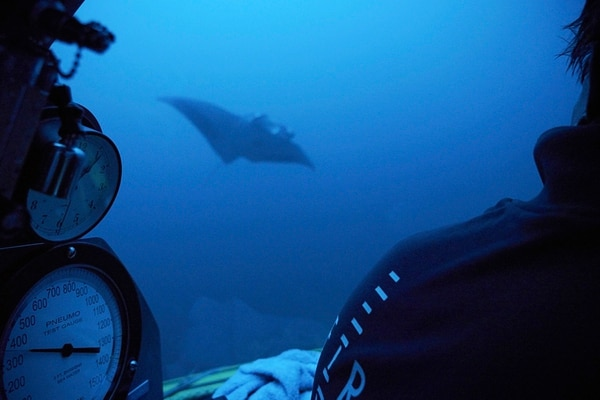 A manta ray swims near the submersible during a dive off the coast of the island of St. Joseph in the Seychelles. (David Keyton/AP)