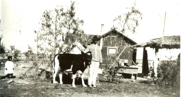 An Allensworth rancher with a prize cow. (Smithsonian Institution)