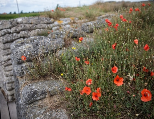 Wild poppies grow in the 'Trench of Death', a preserved World War I trench system in Diksmuide, Belgium. July 31. (Jack Taylor/Getty Images)