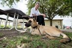 Retired military working dogs up for adoption at Joint Base San Antonio-Lackland