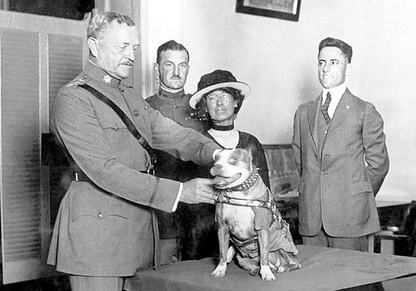 Gen. John Pershing awards Sgt. Stubby with a gold medal in 1921. Stubby served in 17 battles and fought in four major allied offensives during WWI. (Smithsonian InstitutionÕs National Museum of American History)