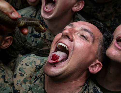 U.S. Marines drink the blood of a king cobra as part of jungle survival training during exercise Cobra Gold 2020 at Ban Chan Khrem, Chanthaburi, Kingdom of Thailand, March 2, 2020. (Lance Cpl. Hannah Hall/Marine Corps)