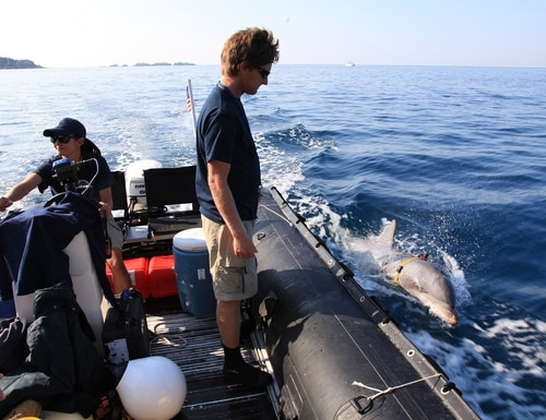 A bottlenose dolphin from the Navy Marine Mammal Program searches for a fake sea mine alongside trainers off the coast of Southern California during the Rim of the Pacific exercise on July 22, 2018. (Navy)