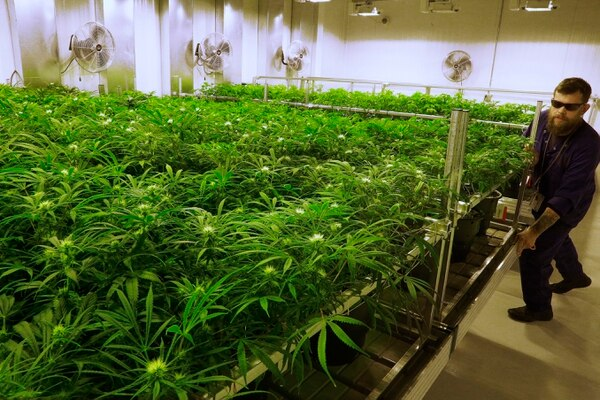 A medical marijuana cultivation center in Albion, Ill. (Seth Perlman/AP)