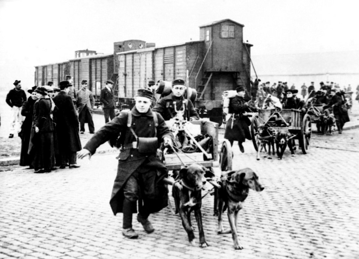 Beasts of burden and their fate in World War I